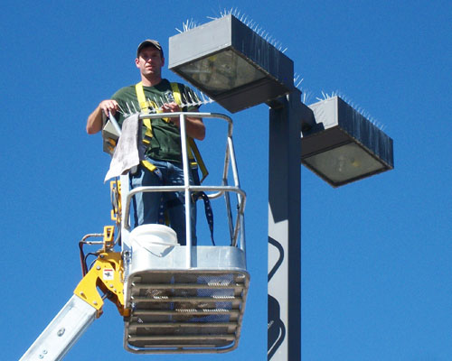 Installing bird spikes to prevent gulls from perching