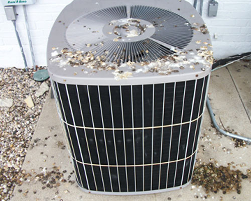 Pigeon droppings on air conditioner